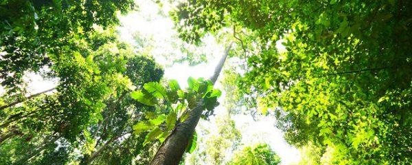 生命溢れる夏の森
