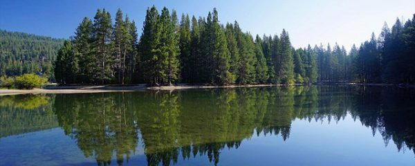 水面に反射する木立